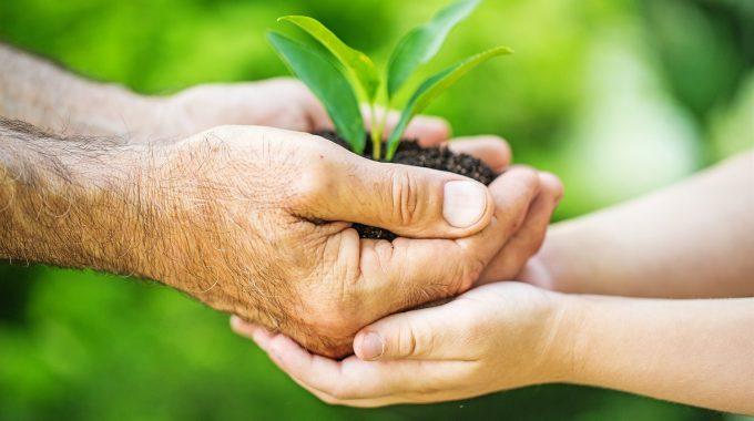 Une personne âgée donne à un enfant une motte de terre avec une plante