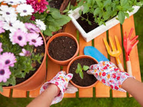 Enfant qui met en pot des petites plantes pendant un atelier de jardinage
